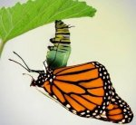 Caterpillar to butterfly2